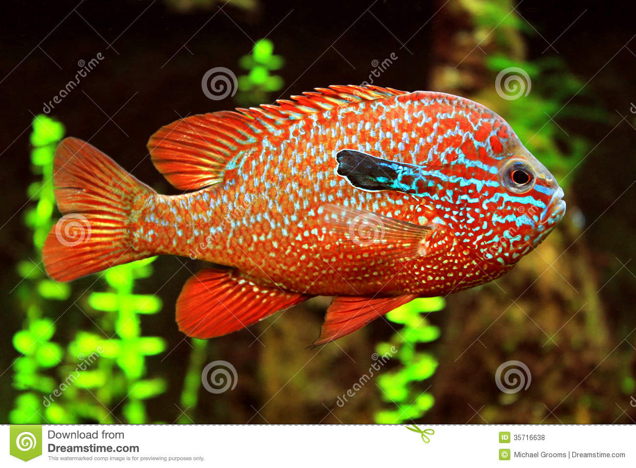 Colorful fish stock photo image of marine swimming for Image of fish