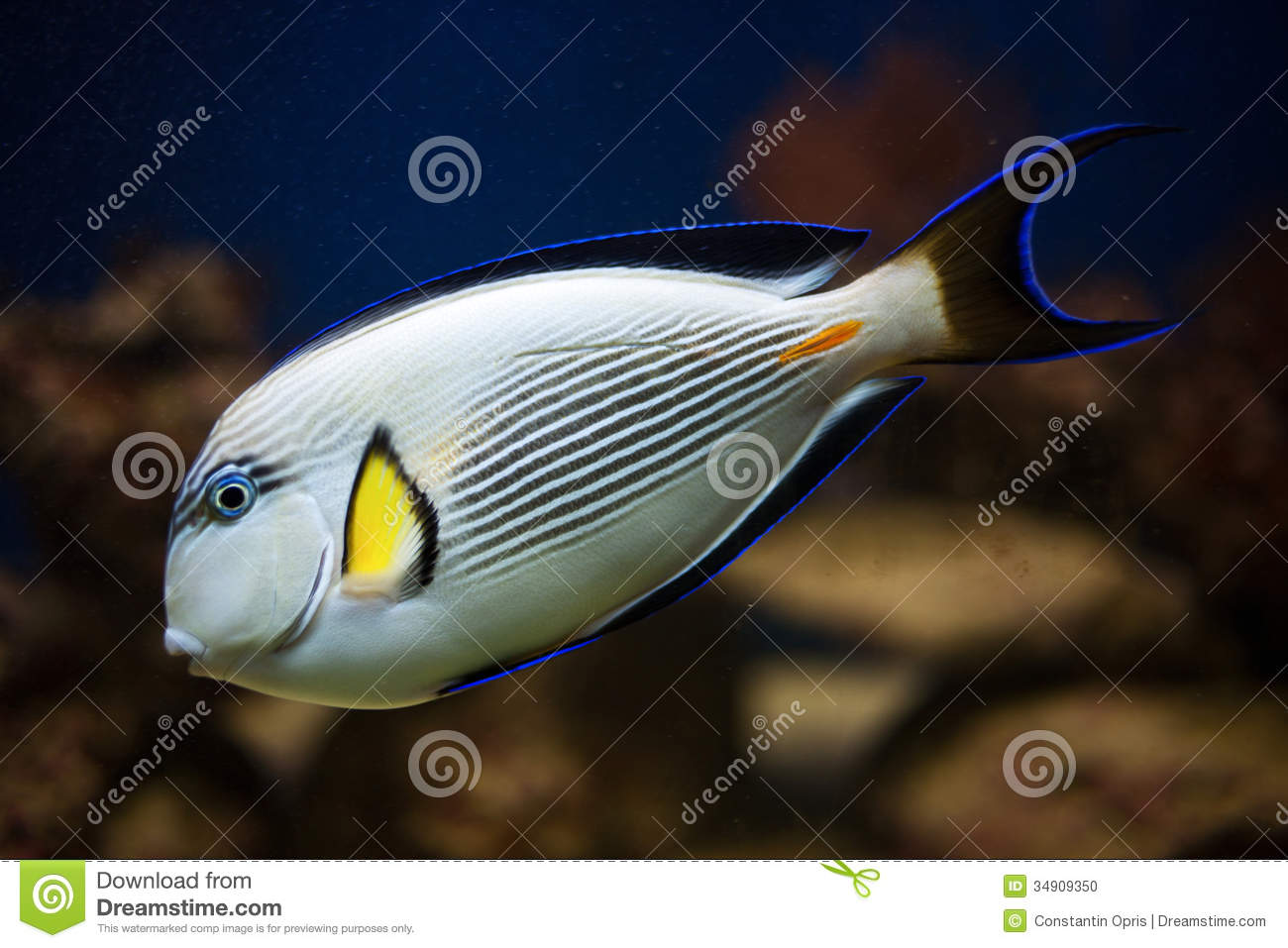 Colorful fish stock photo image of nature water exotic for Dream of fish swimming
