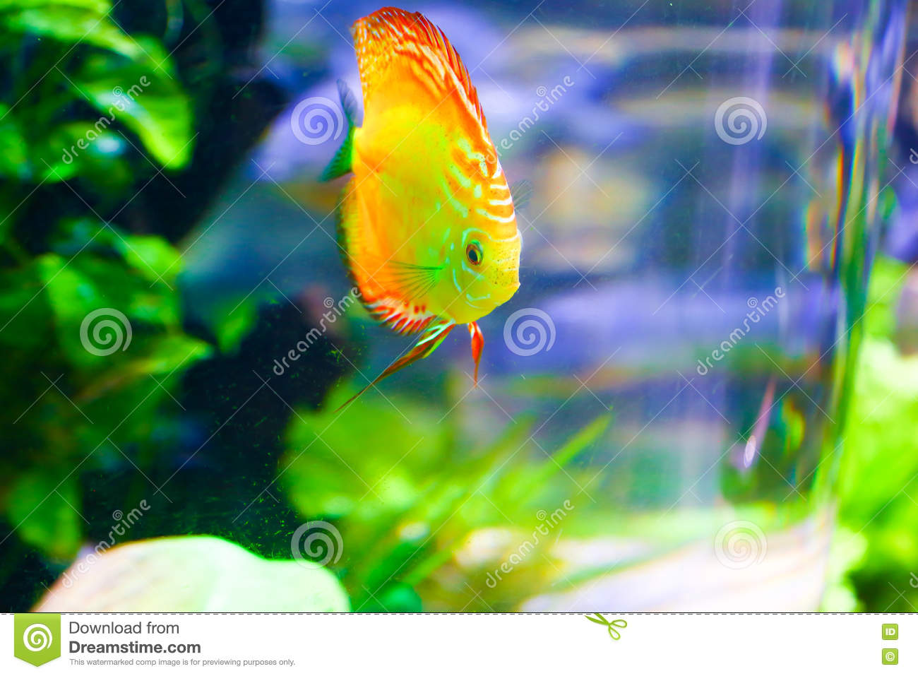 Colorful Fishes In Green - Underwater Life Stock Photo - Image of ...