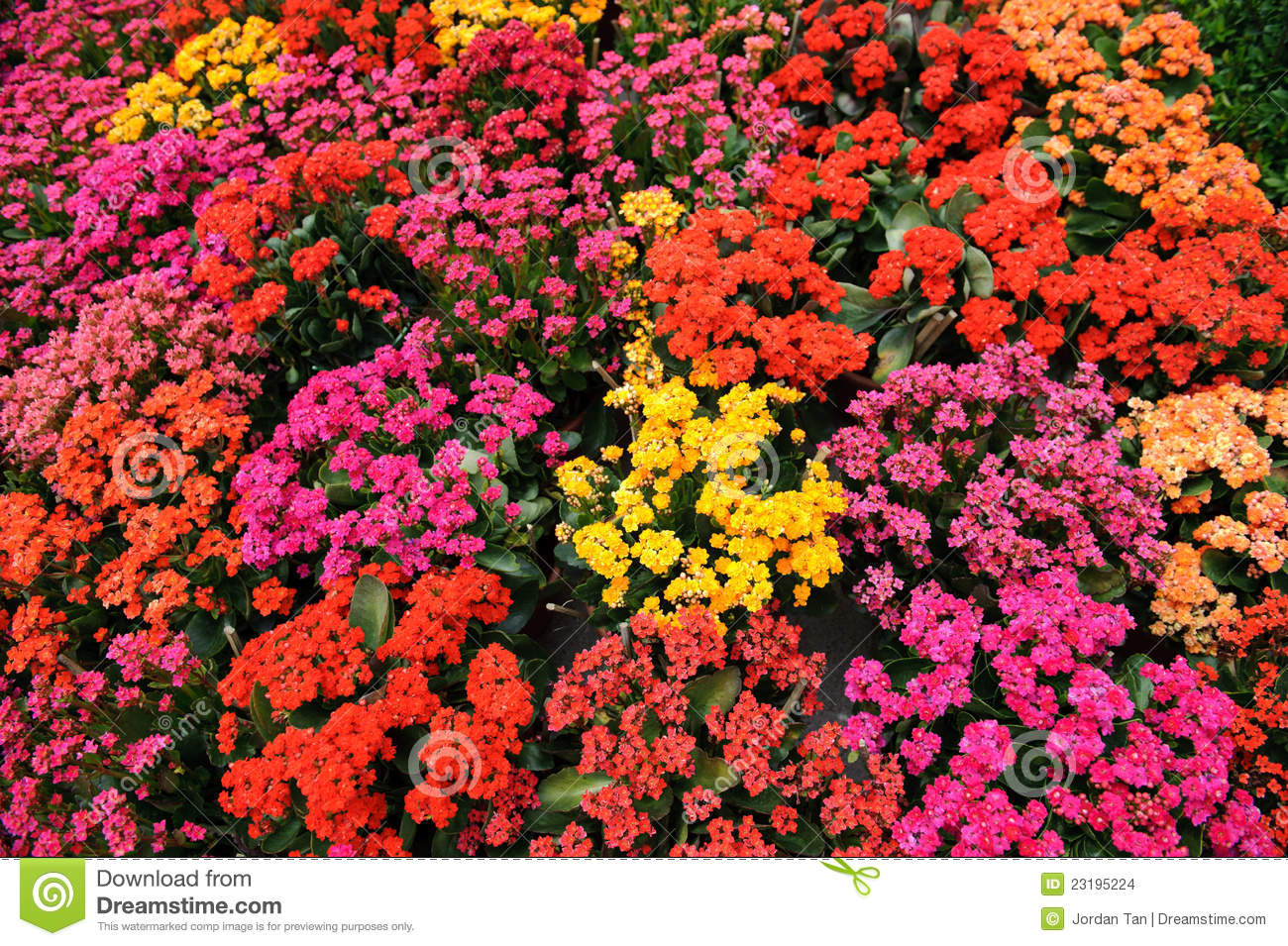 Colorful Flower Bed Stock Images - Image: 23195224