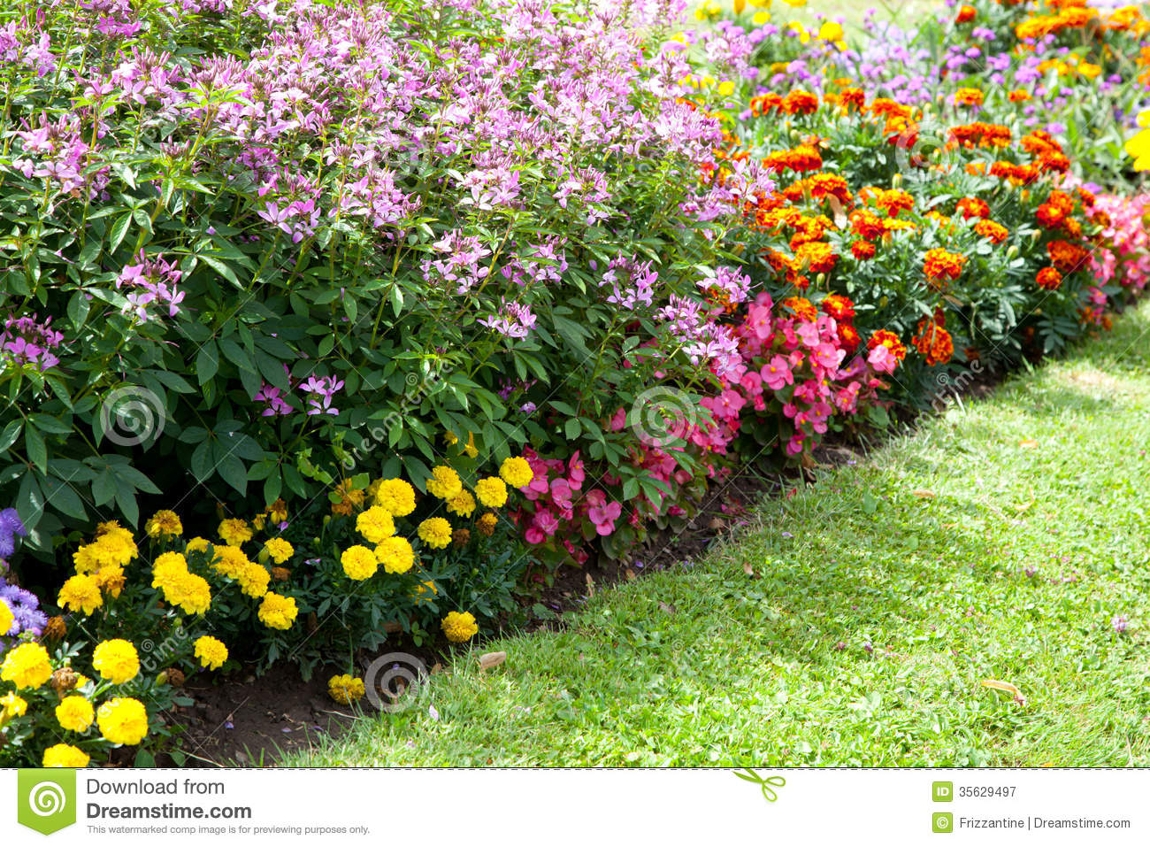 Colorful flower design in garden royalty free stock for Flowers landscape gardening