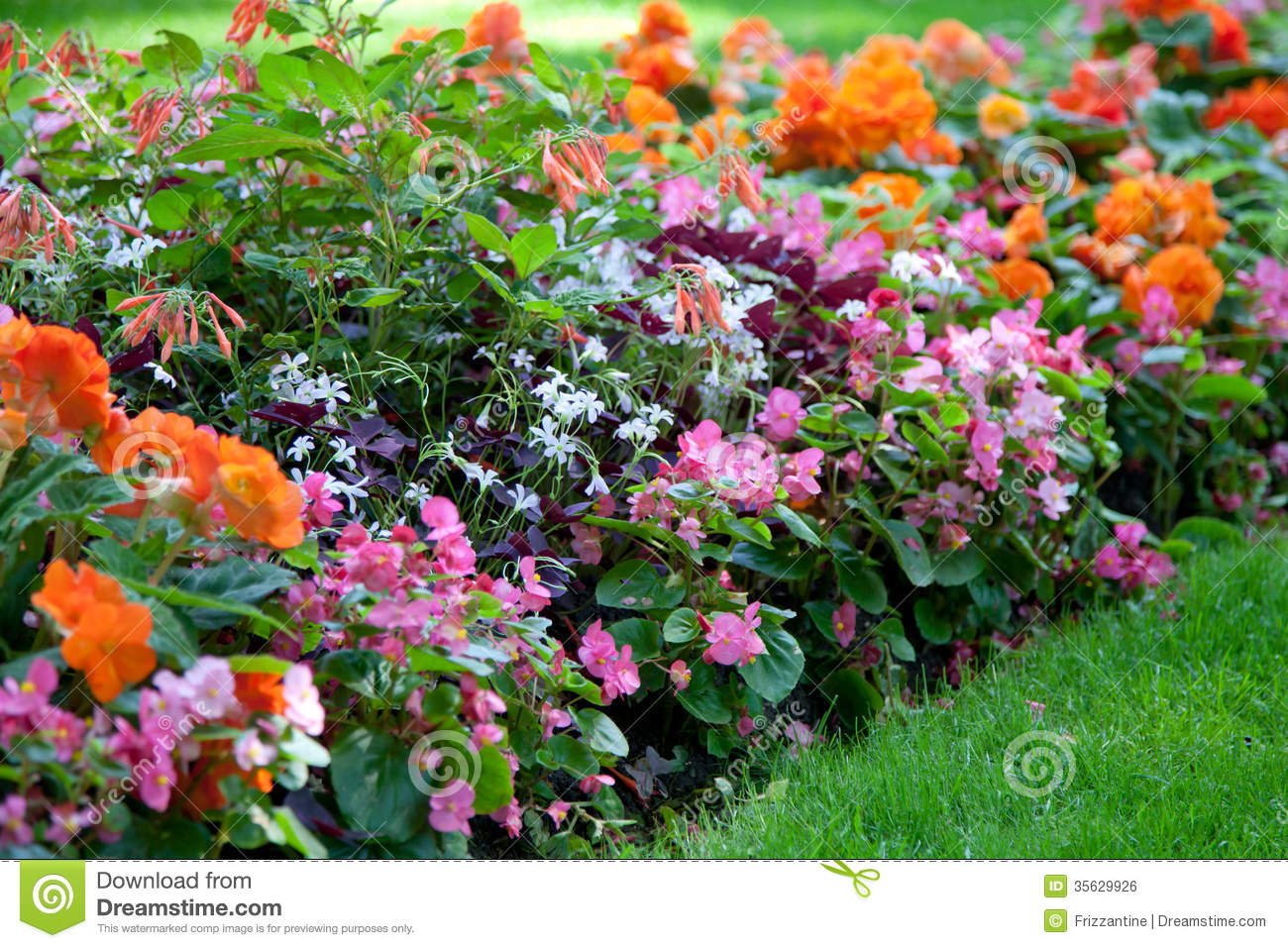 Colorful Flower Design In Garden Royalty Free Stock Image