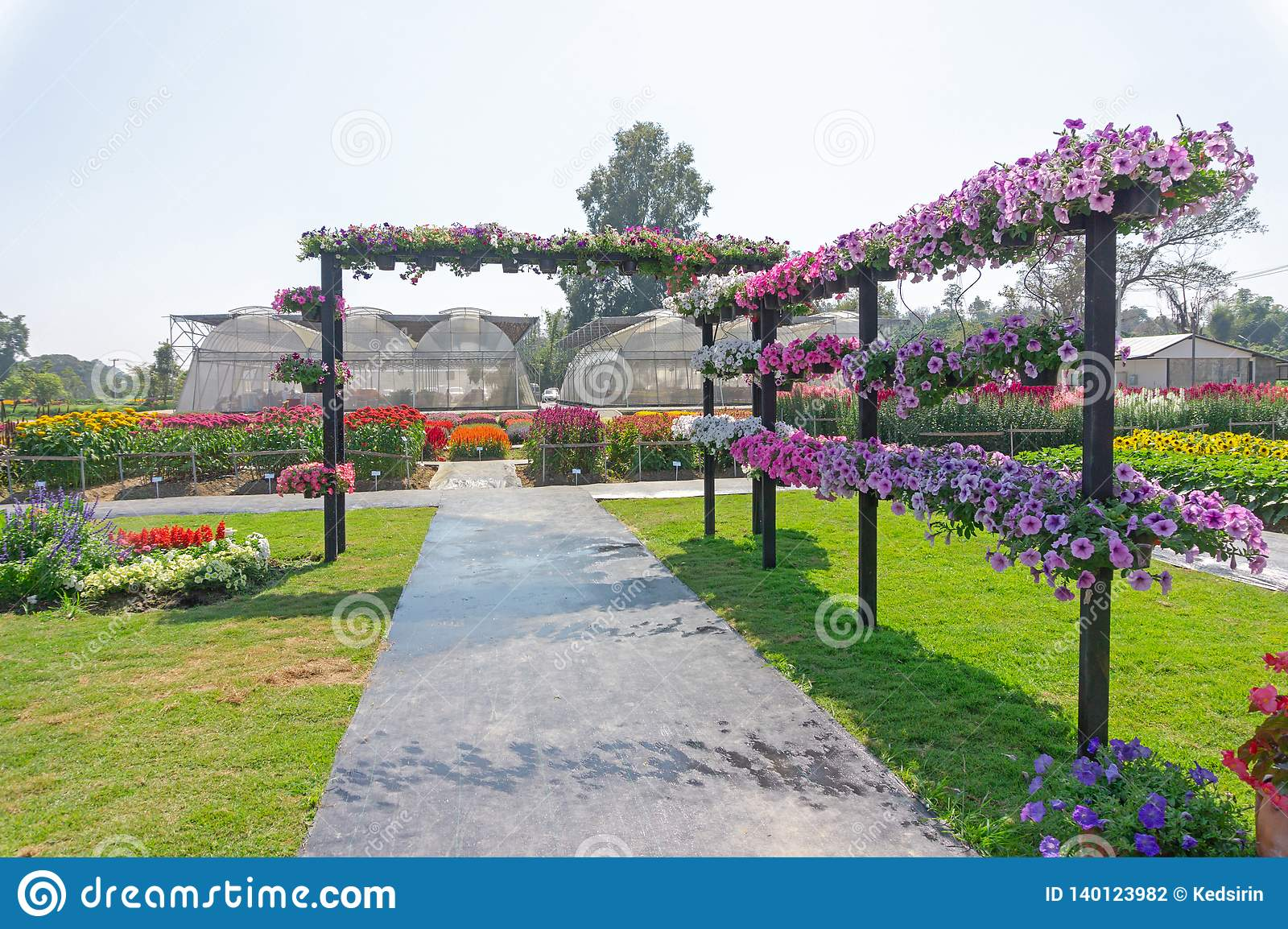 Colorful Flower In Outdoor Garden Designs Stock Photo Image Of