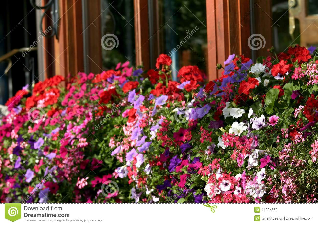 Colorful flowers stock photo image of pretty colorful 11994562 colorful flowers mightylinksfo
