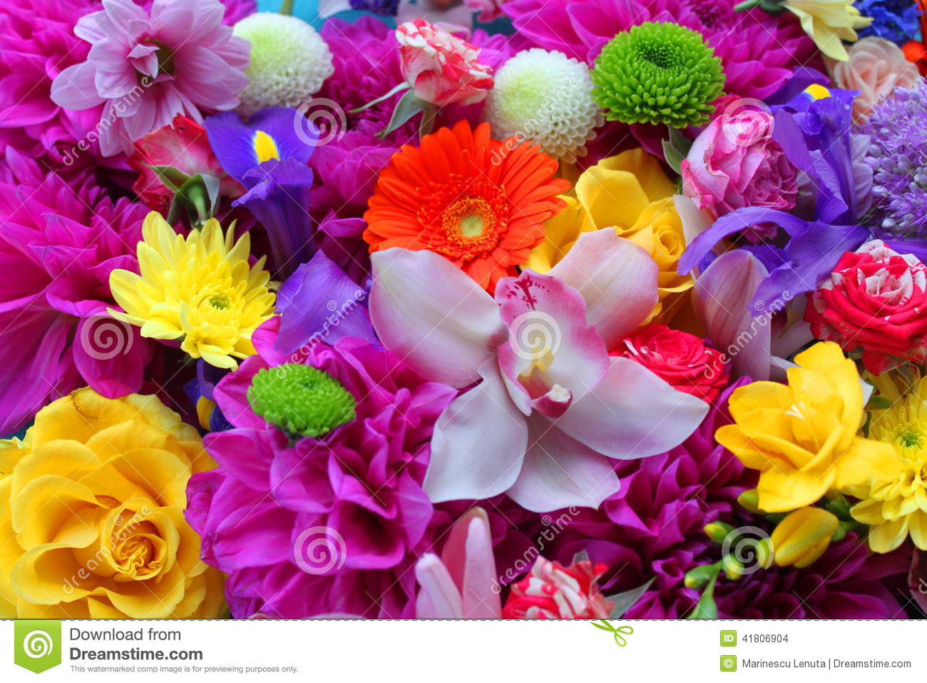 colorful flowers background stock photo - image of flowering, bloom