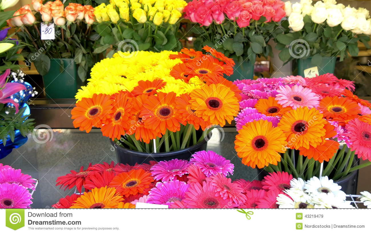 Colorful flowers being displayed on the flower shop gh4 4k uhd stock colorful flowers being displayed on the flower shop gh4 4k uhd stock video video of business agriculture 43219479 izmirmasajfo