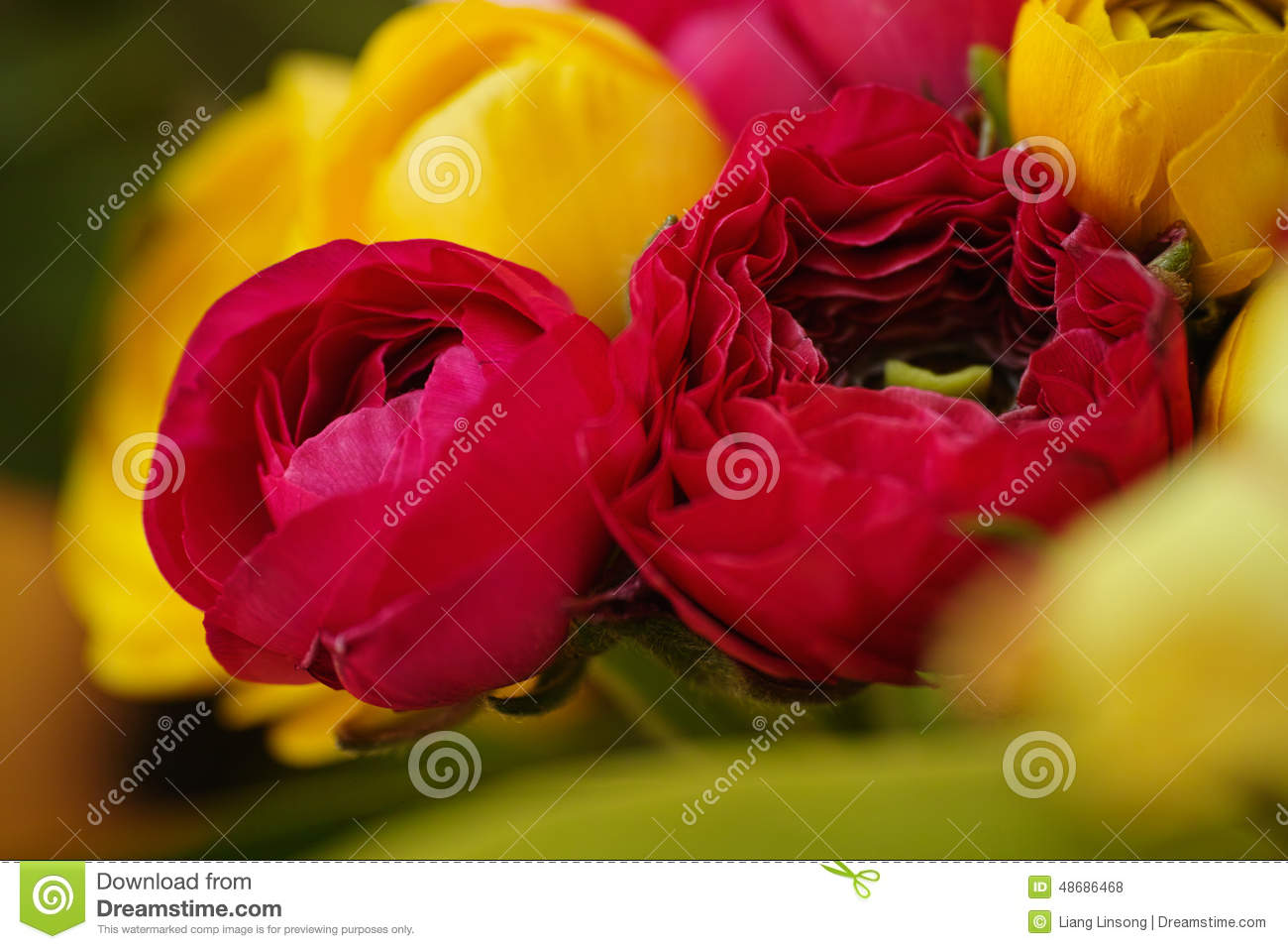 Colorful flowers blooming stock photo. Image of pink - 48686468
