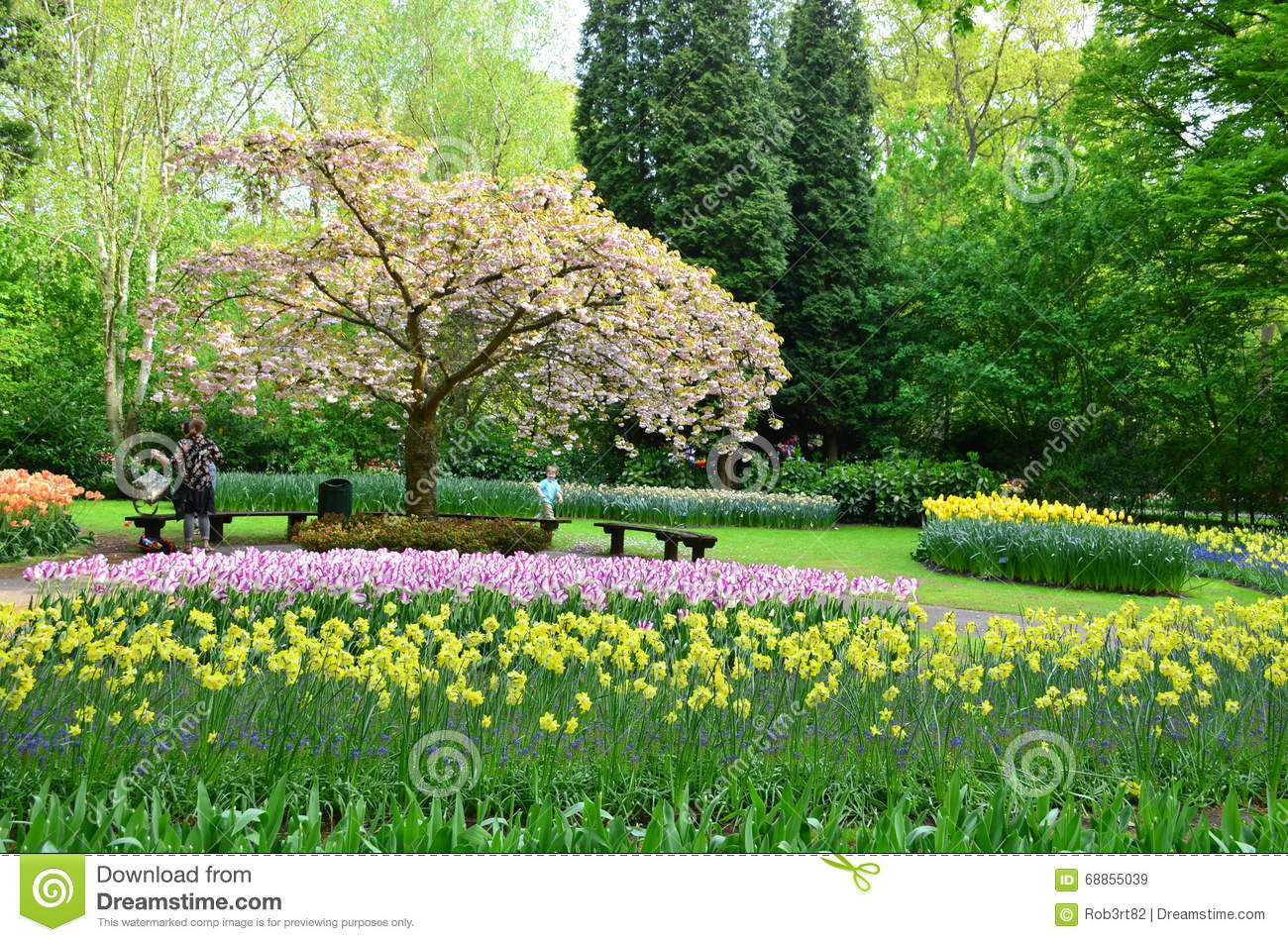 Colorful flowers and blossom in dutch spring garden keukenhof which download colorful flowers and blossom in dutch spring garden keukenhof which is the worlds largest flower izmirmasajfo