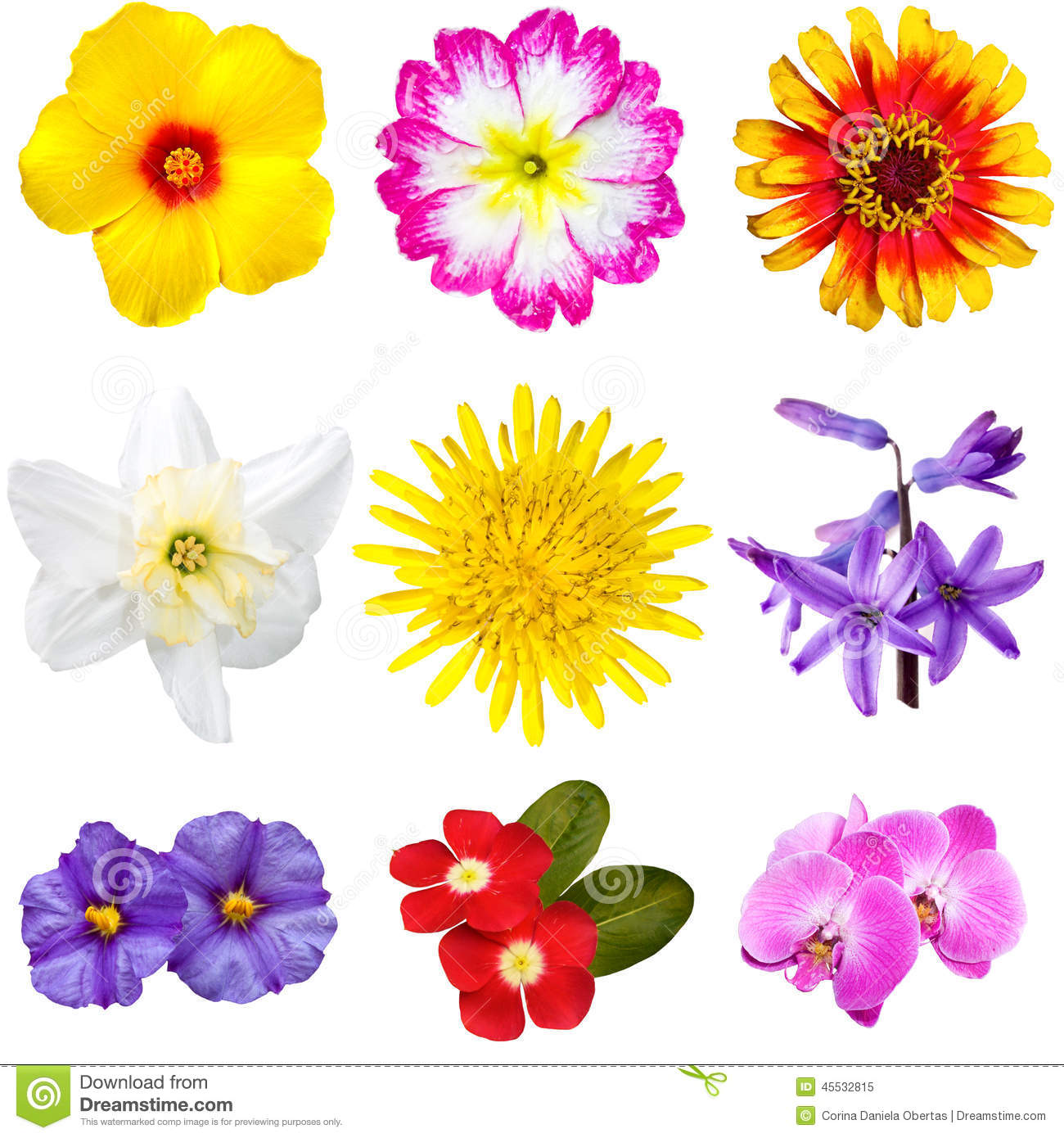 Colorful Flowers Cutouts Stock Image. Image Of Flower