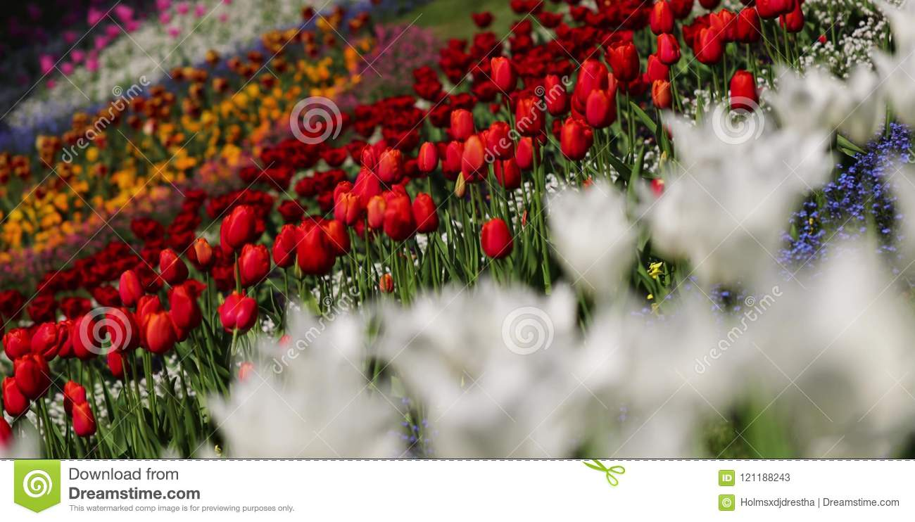 Colorful Flowers In The Garden Beautiful And Breathtaking Spring