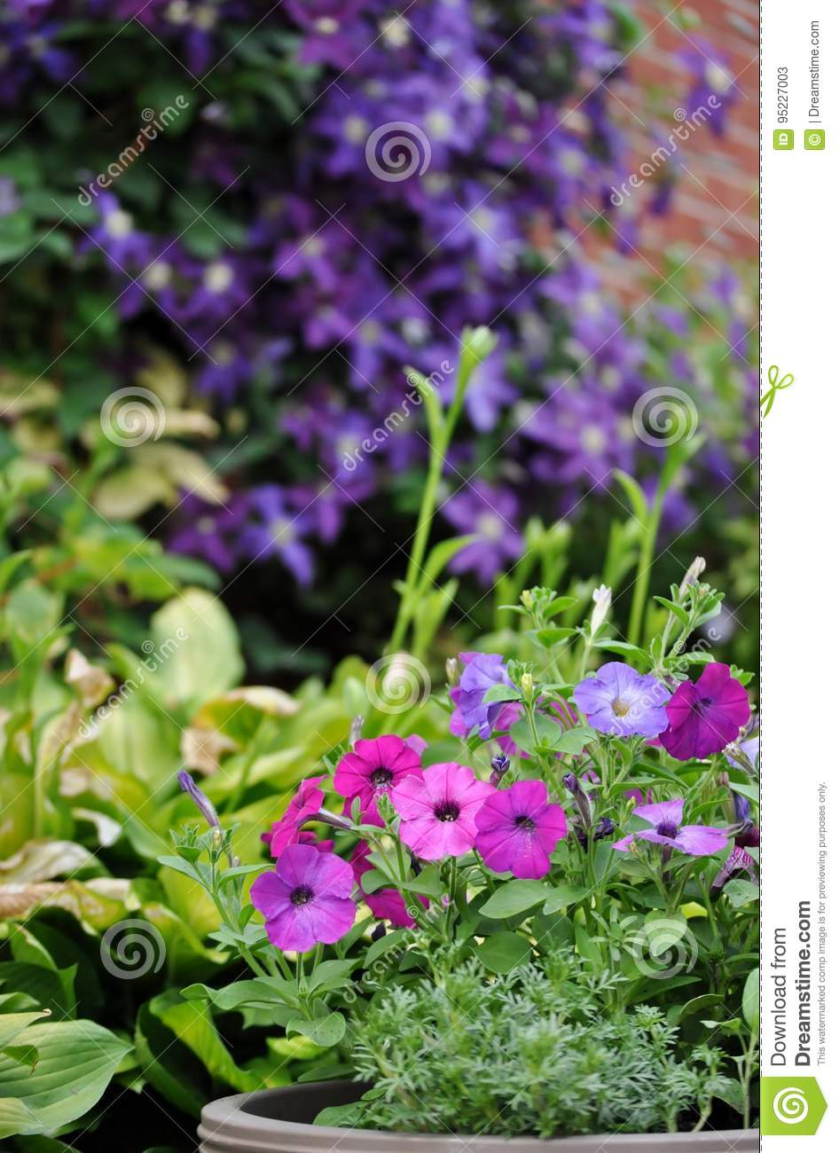 Colorful Flowers In The Garden Stock Image Image Of Dark Floral