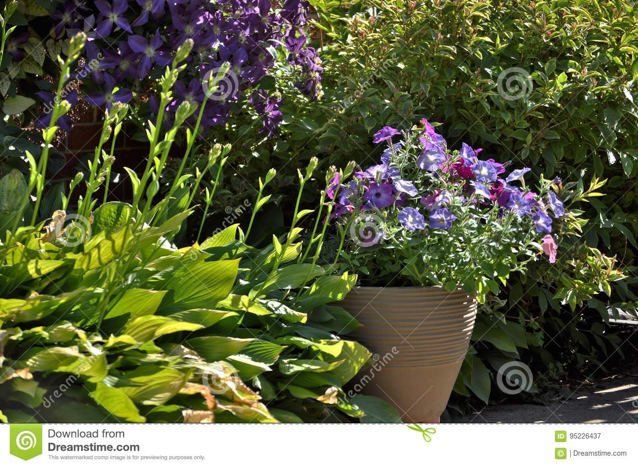 Colorful Flowers In The Garden Stock Image Image Of Front