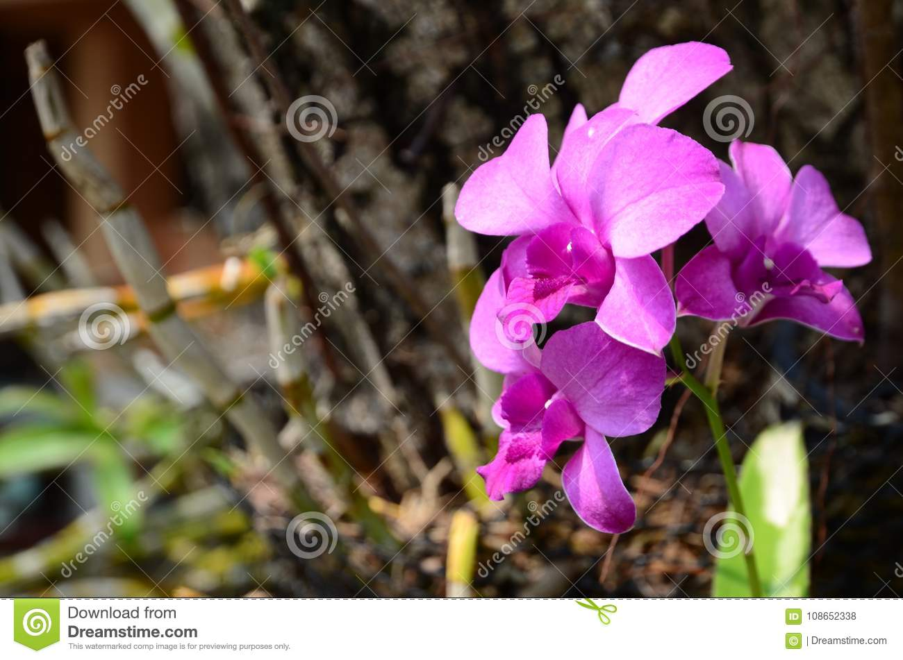 Colorful flowers in nature orchid flower stock photo image of colorful flowers in nature group of yellow bouquet flower with green leaves beautiful pink and purple flowers in nature around the house orchid flower izmirmasajfo