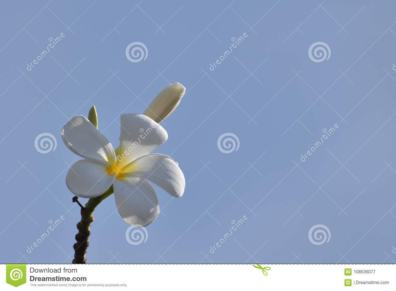 Colorful Flowers In Naturewhite Flowers Stock Image Image Of