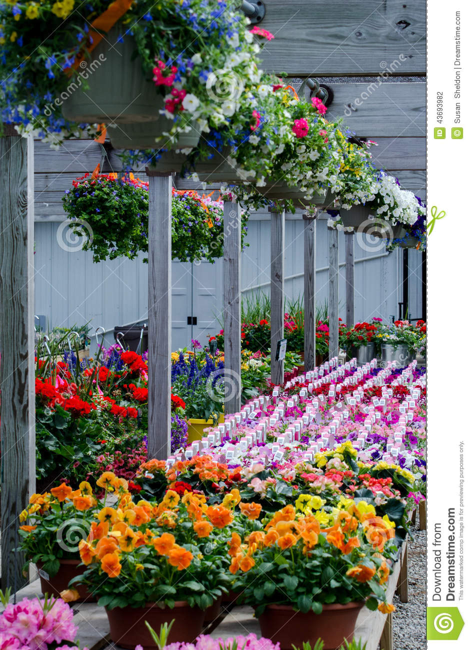 Flower Hanging Baskets Sale : Colorful flowers for sale stock photo image