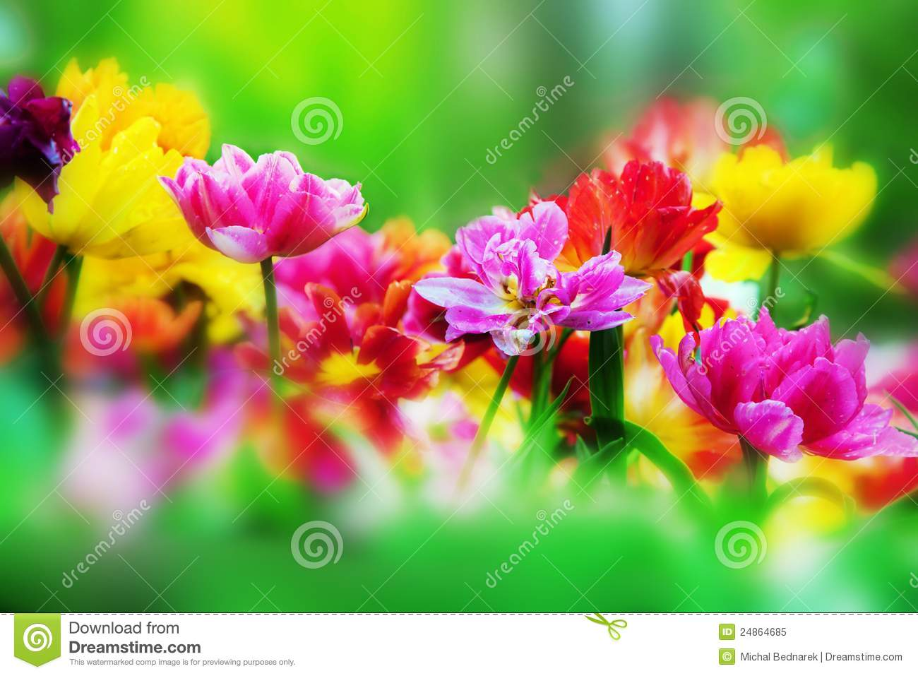 Colorful Flowers In Spring Garden Stock Image - Image of copyspace ...