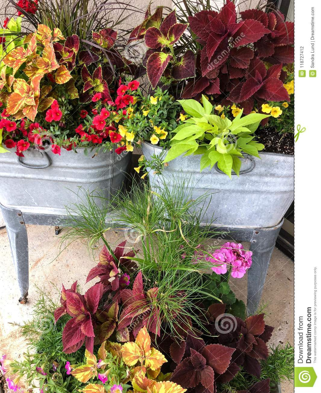 Colorful Flowers In Stainless Steel Tubs Stock Photo - Image of ...