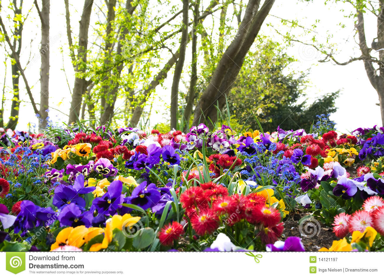 Colorful flowers and trees stock image. Image of diversity - 14121197