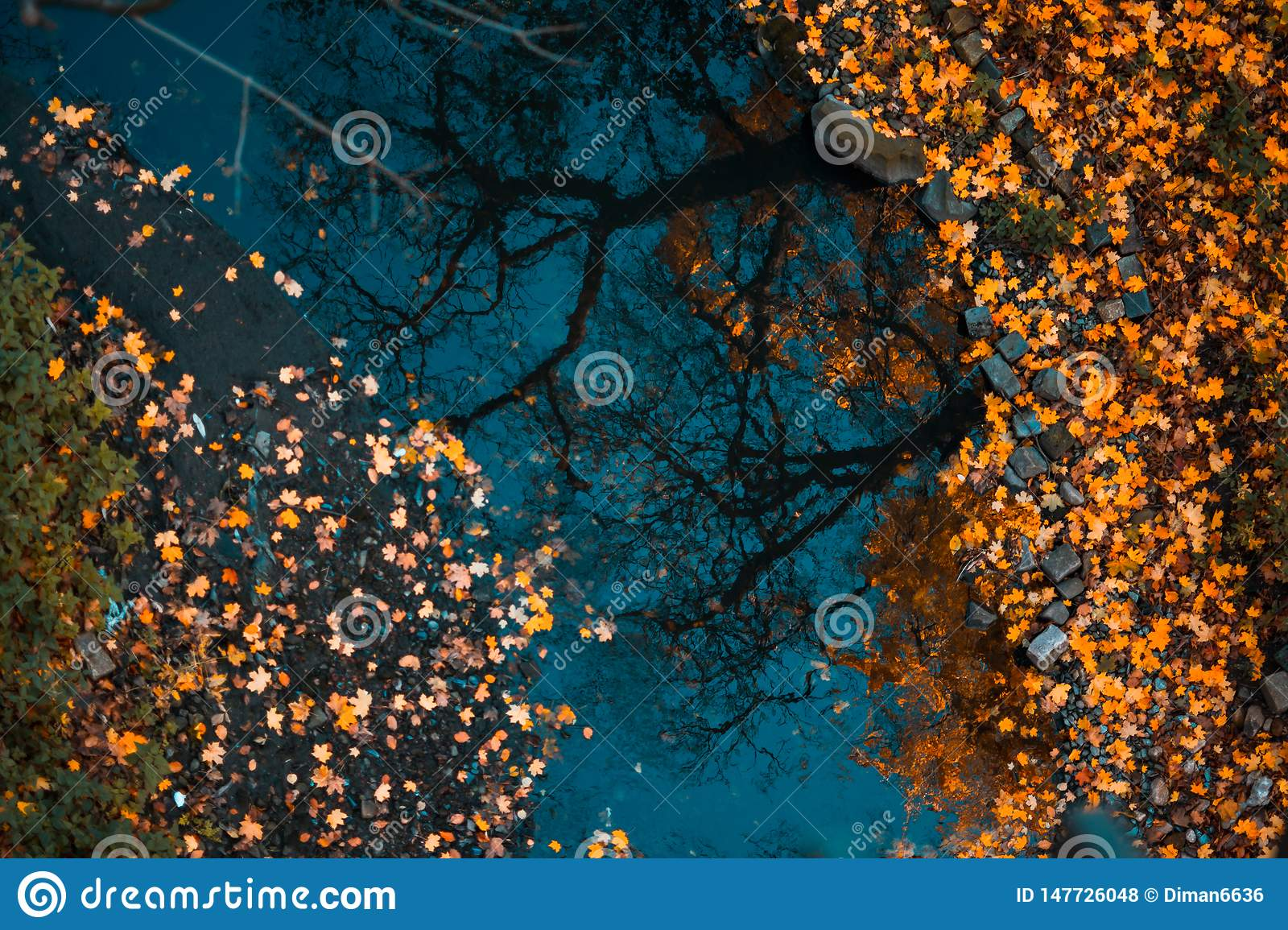 Colorful foliage floating in the dark water with reflection of the trees