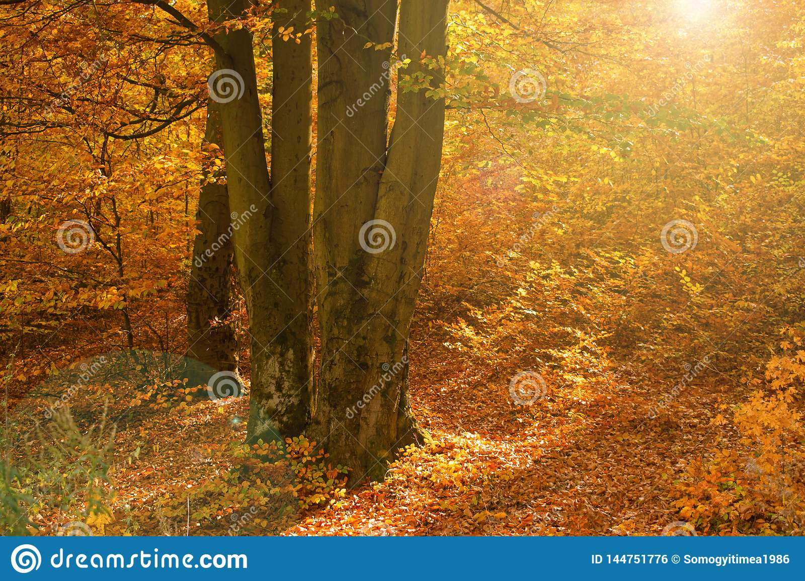 Colorful forest at autumn