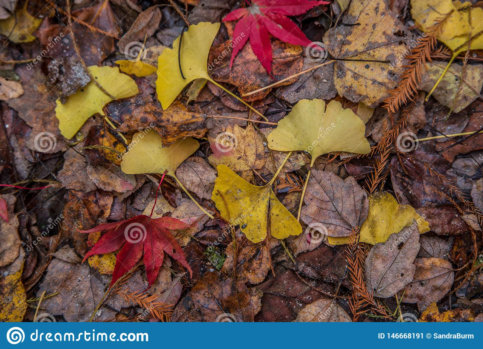 Colorful forest floor in autumn