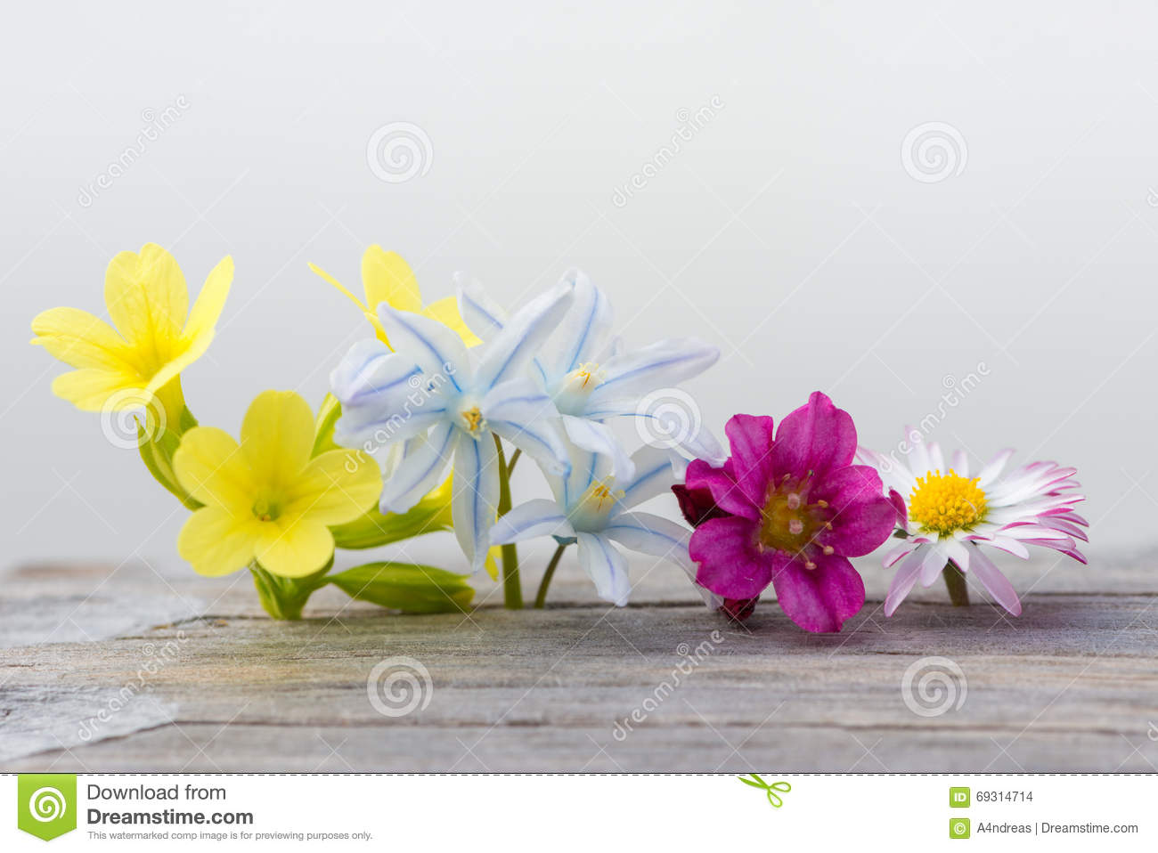 Colorful fresh spring flowers on wood stock photo image of flora colorful fresh spring flowers on wood mightylinksfo