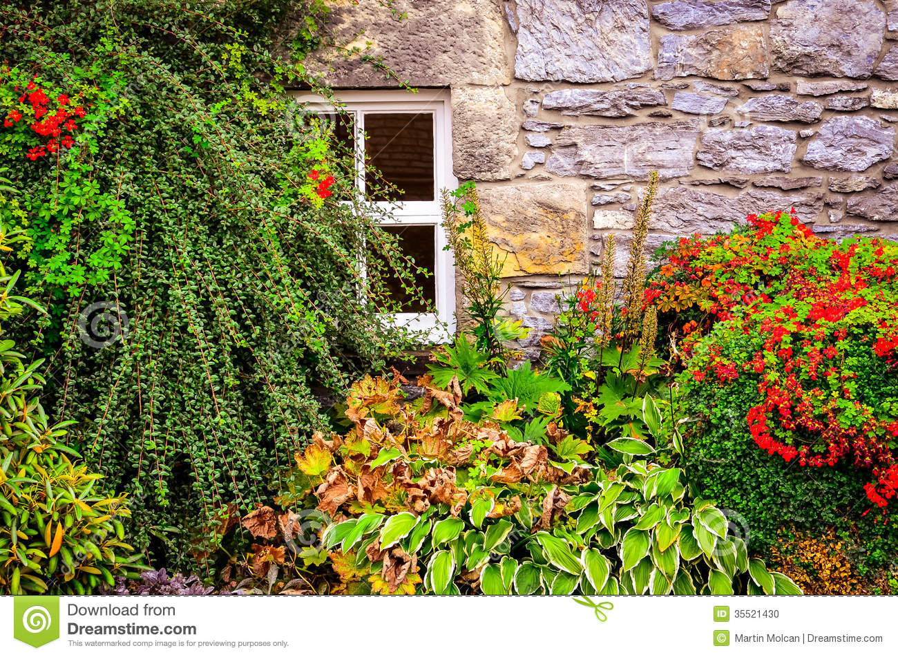 Colorful Garden Plants With Wall And Window Background Stock Photo - Colorful flower garden background
