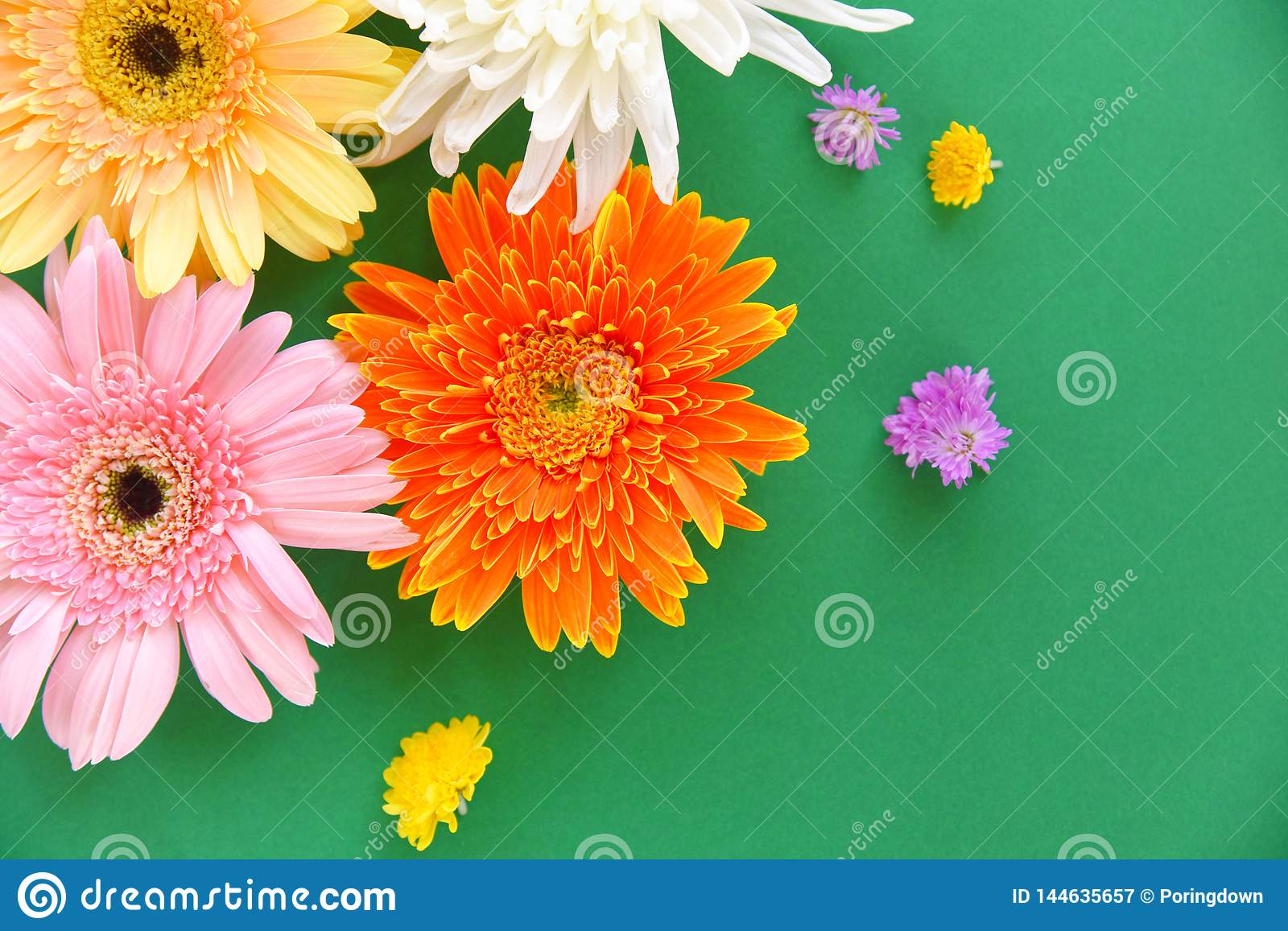 Colorful gerbera spring flowers summer beautiful blooming on green background - Flat lay Top view
