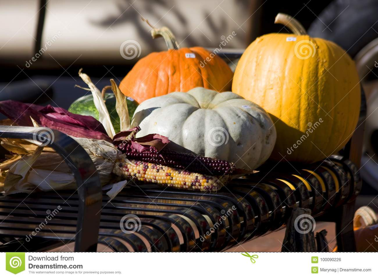 Autumn Still Life Stock Photo Image Of Gourds Market 100090226