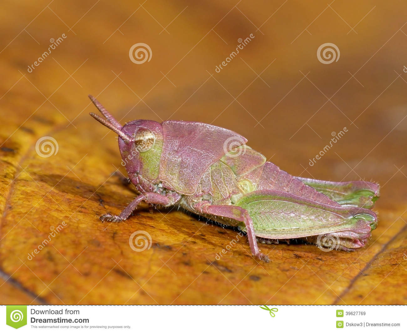 colorful leaf hopper by - photo #31