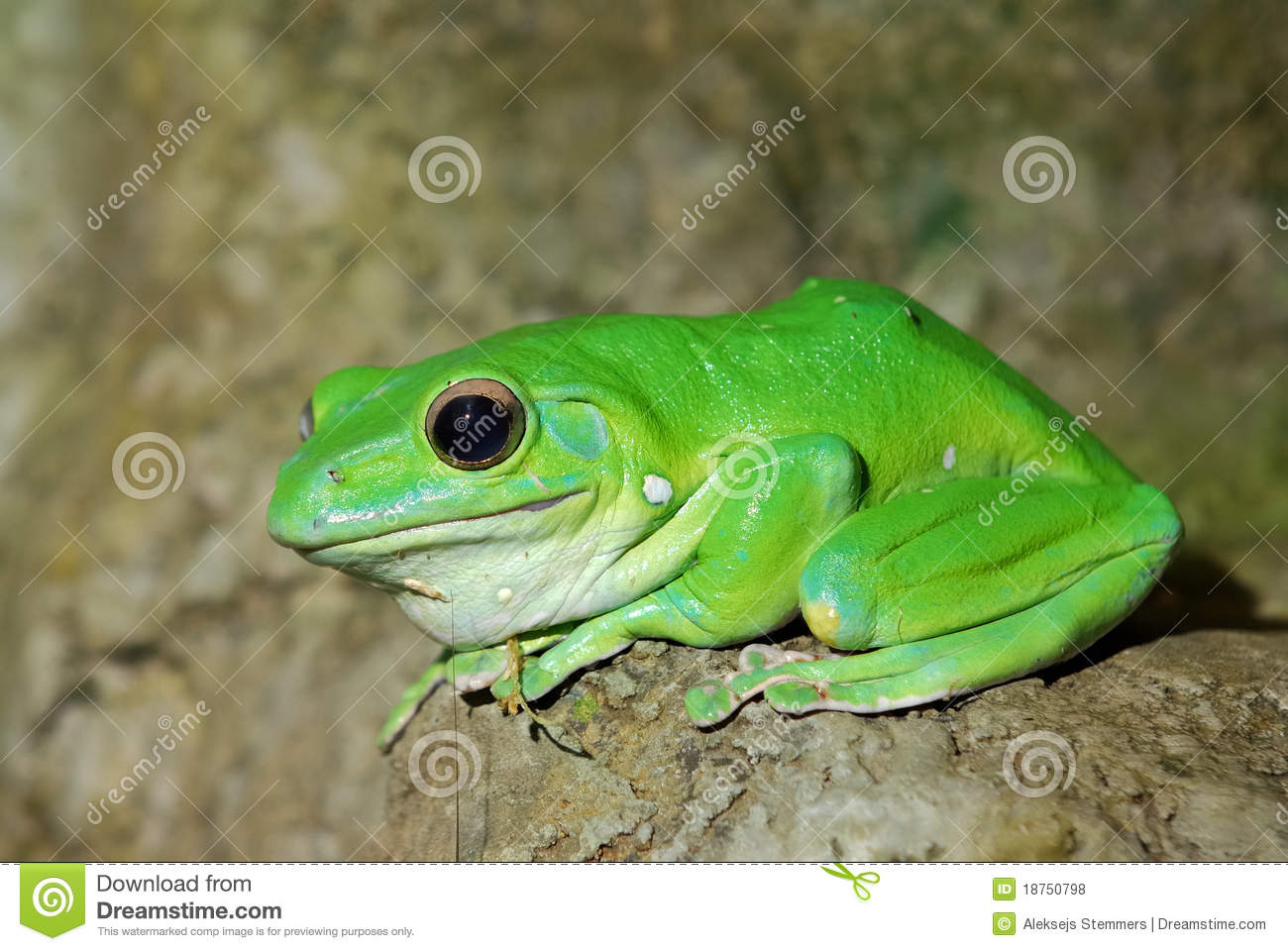 Colorful Green Frog Royalty Free Stock Photos - Image: 18750798