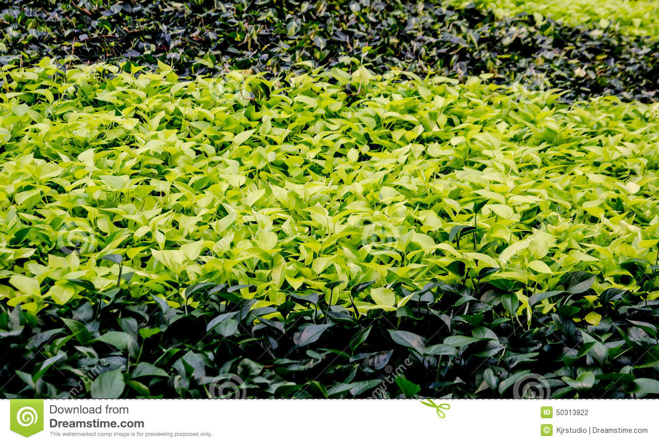colorful ground cover  stock photo