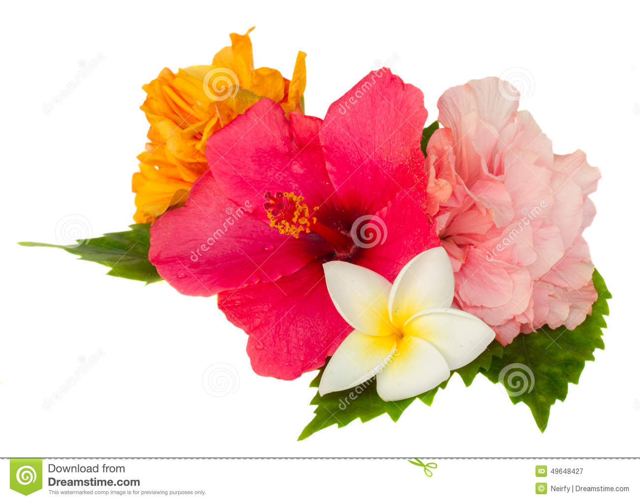 Colorful hibiscus flowers stock image. Image of floral - 49648427