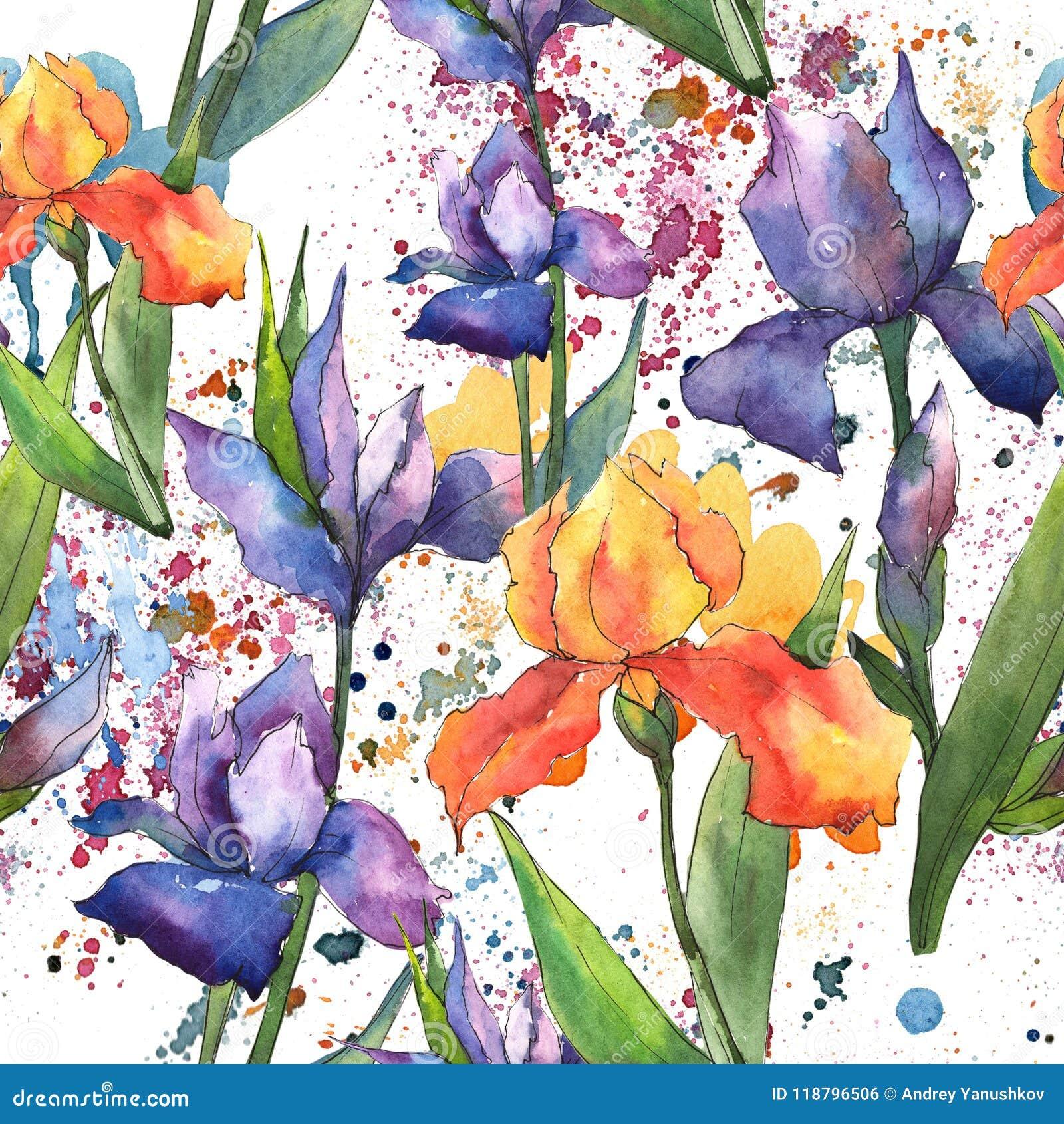 Colorful irises. Floral botanical flower. Seamless background pattern.
