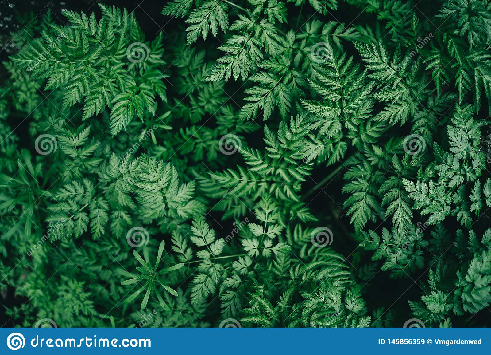 Colorful juicy background with green leaves like fern leaves