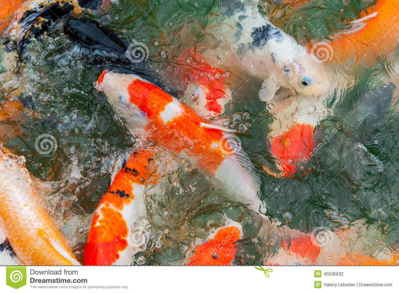 Colorful koi carp stock photo image 45535632 for Colourful koi fish