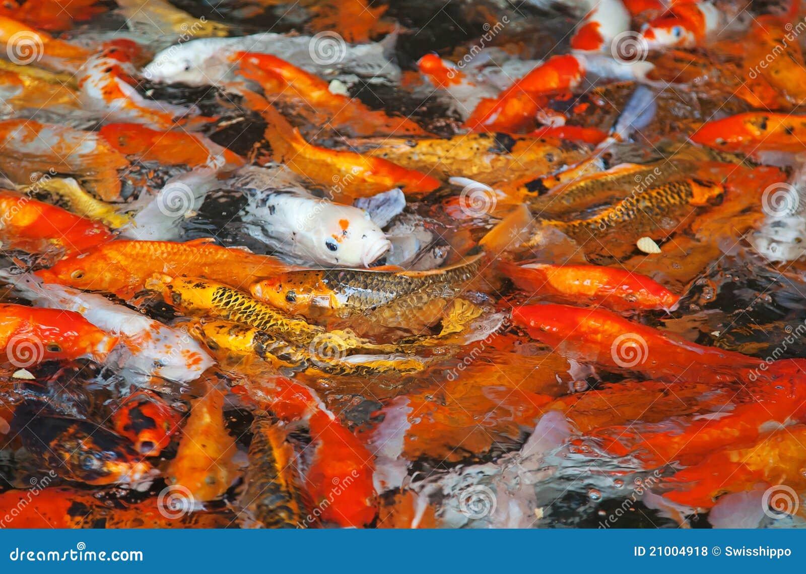 Colorful koi fish royalty free stock photos image 21004918 for Koi carp colours