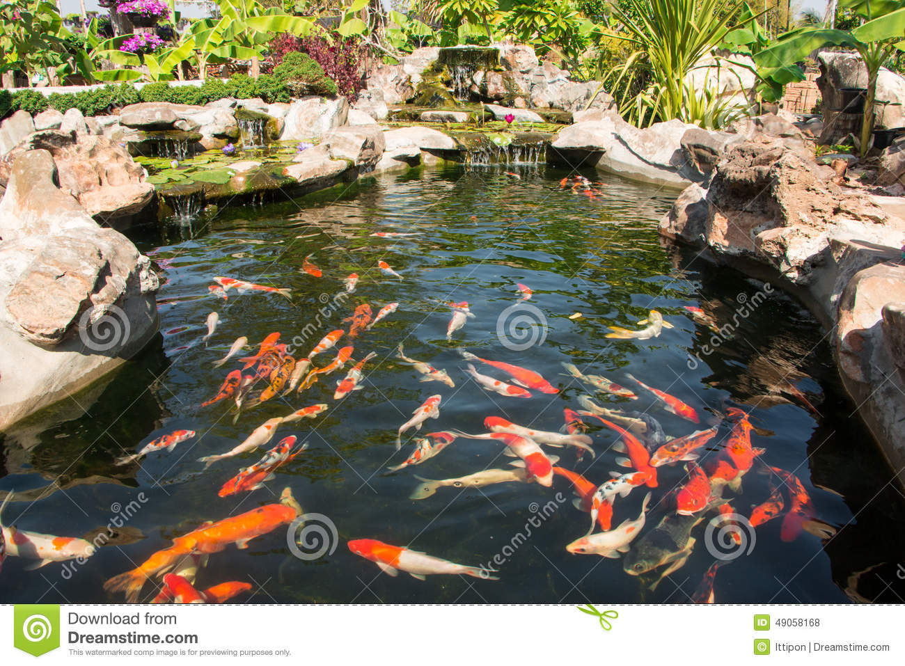Colorful koi fish stock photo image of full nature for Colorful pond fish