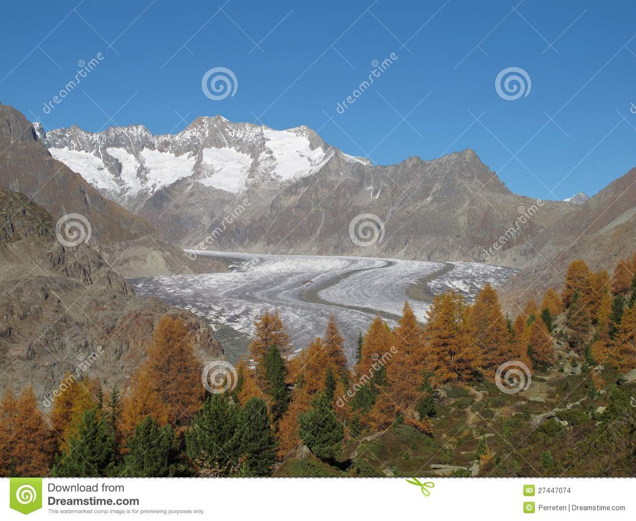 Colorful Larch Forest And Glacier