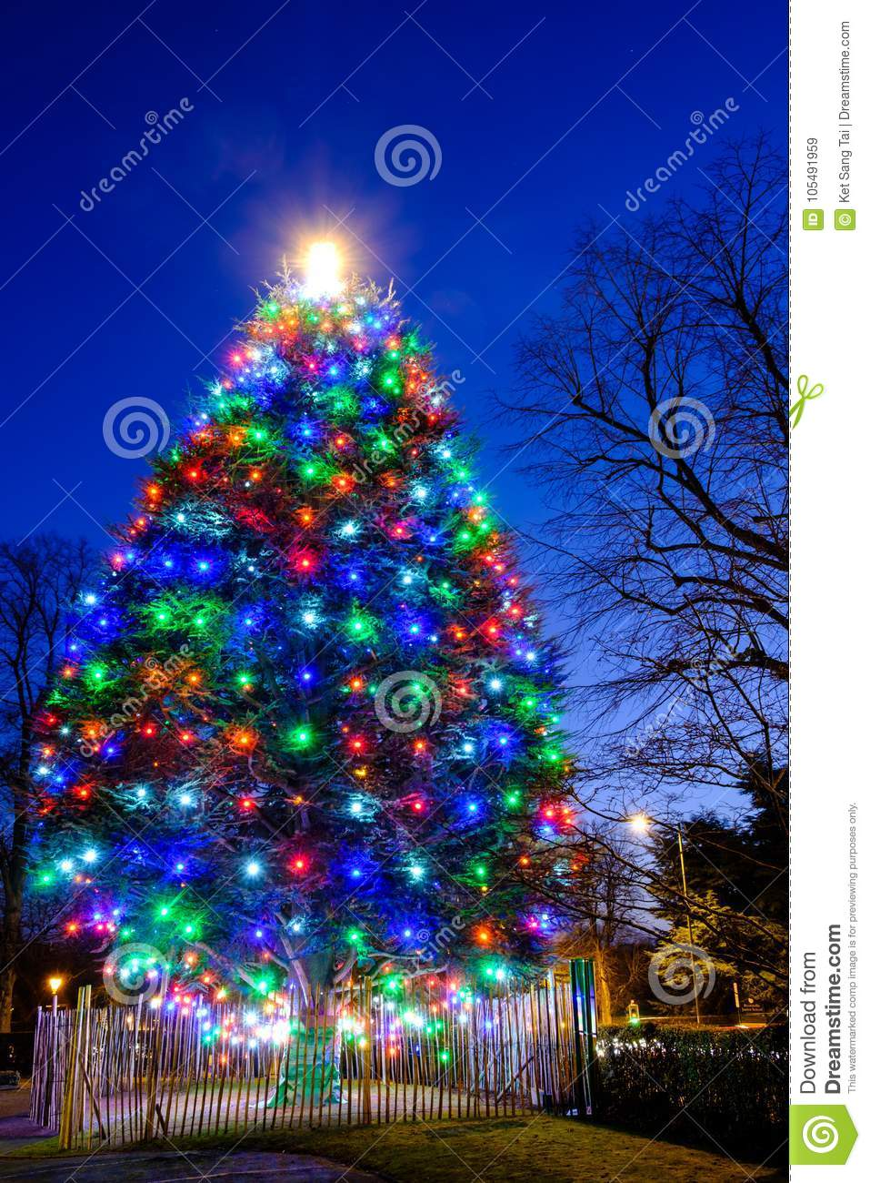 colorful lights on a real outdoot christmas tree