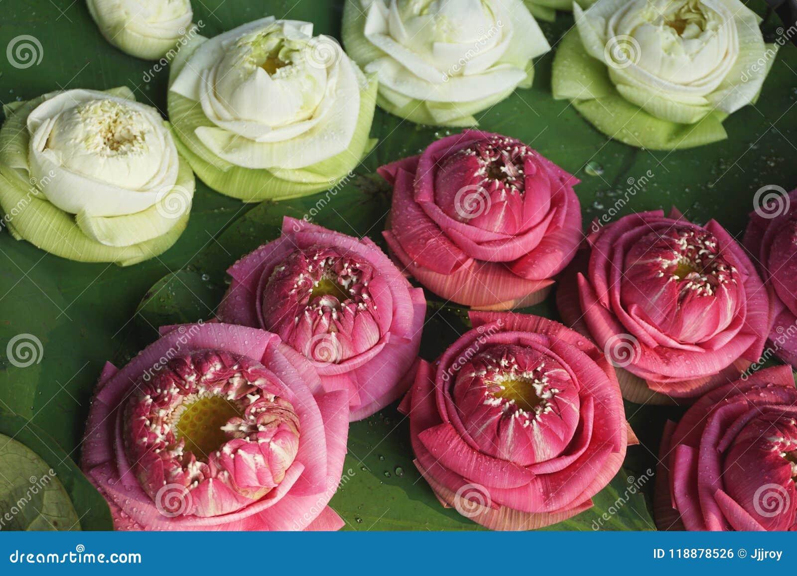 Colorful Lotus Flower Offerings At A Hindu Temple In Bangkok