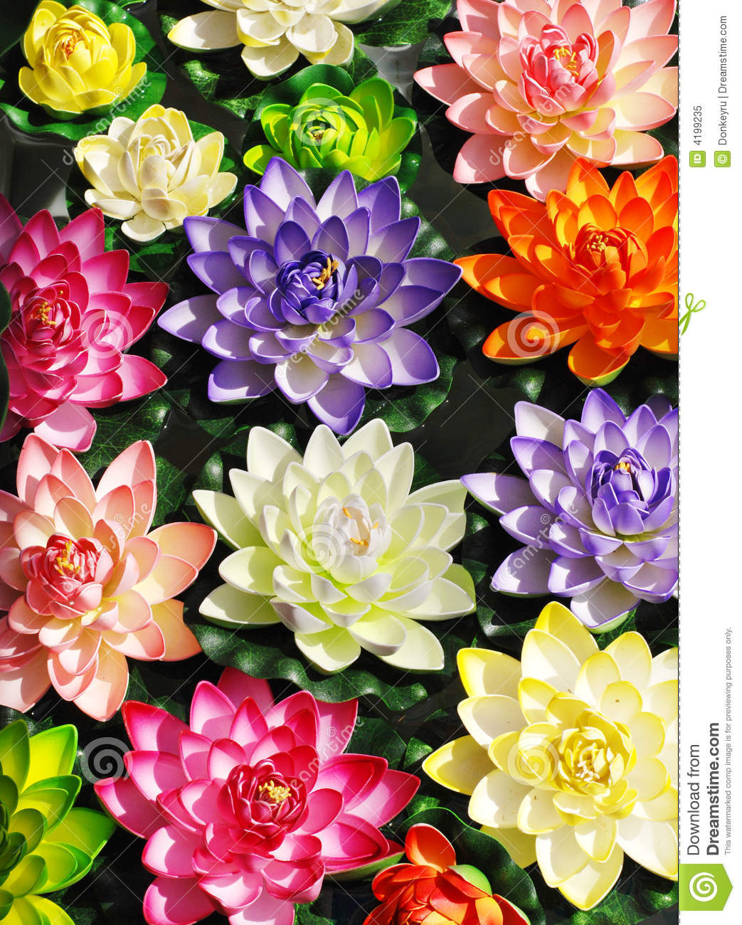 Colorful lotus flowers stock image image of flower feminine 4199235 colorful lotus flowers mightylinksfo