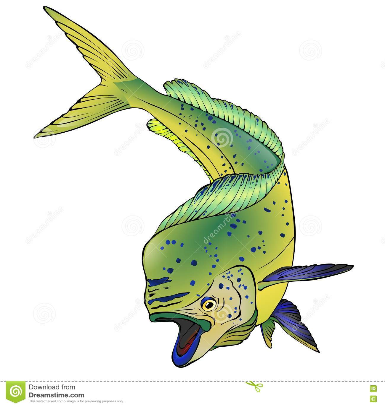 Dorado Fish Vector Illlustration Stock Vector - Illustration of ...