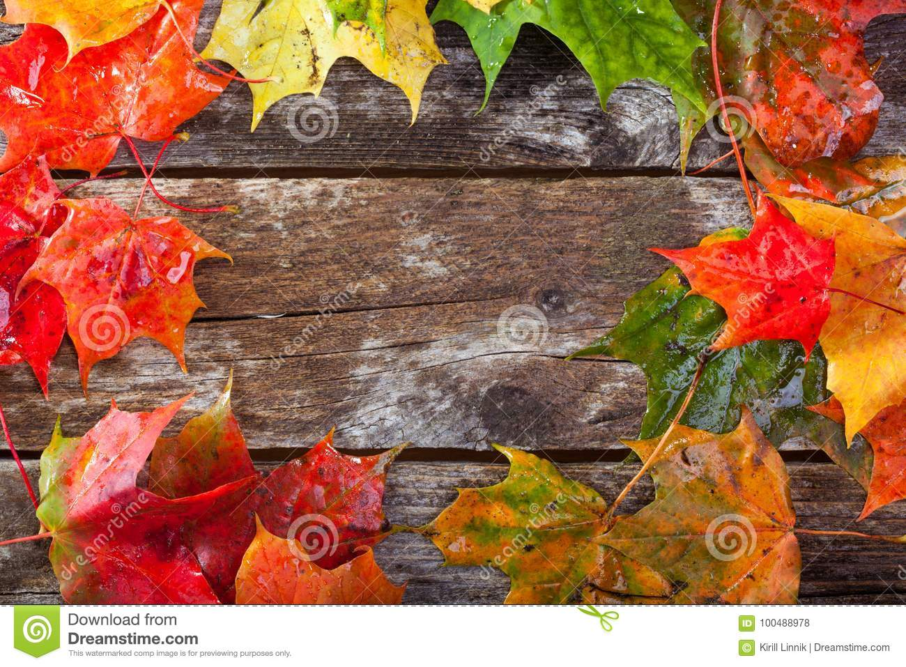 Download Maple foliage on the able stock photo. Image of holidays - 100488978