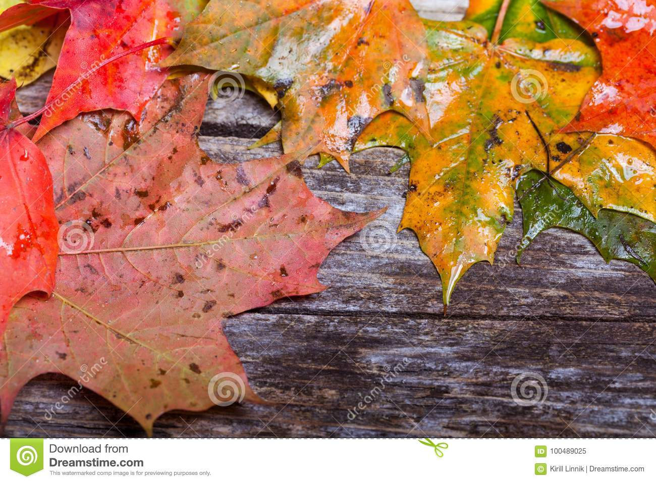 Download Maple foliage on the able stock image. Image of dirt - 100489025