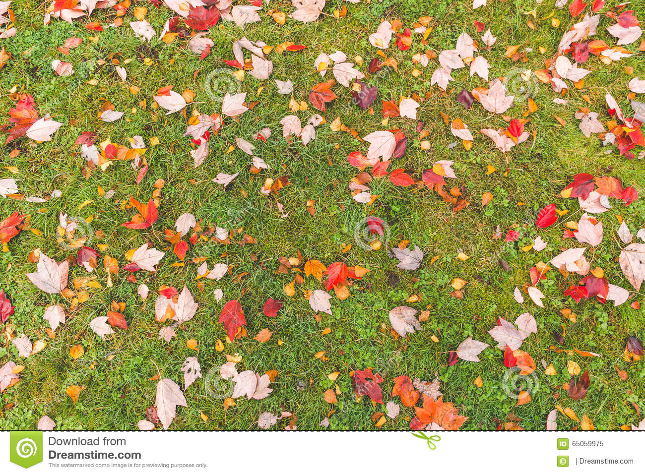Colorful maple leave on the ground,lawn for background in the park.