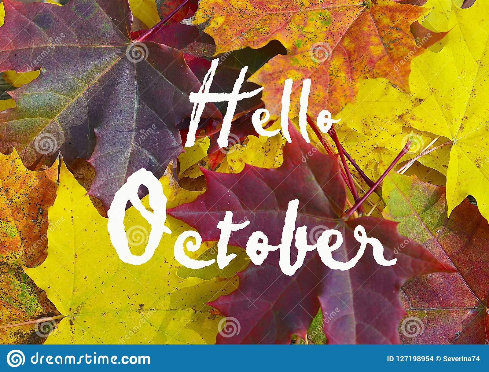 Colorful maple leaves background with text Hello October.Autumn or Fall season concept.