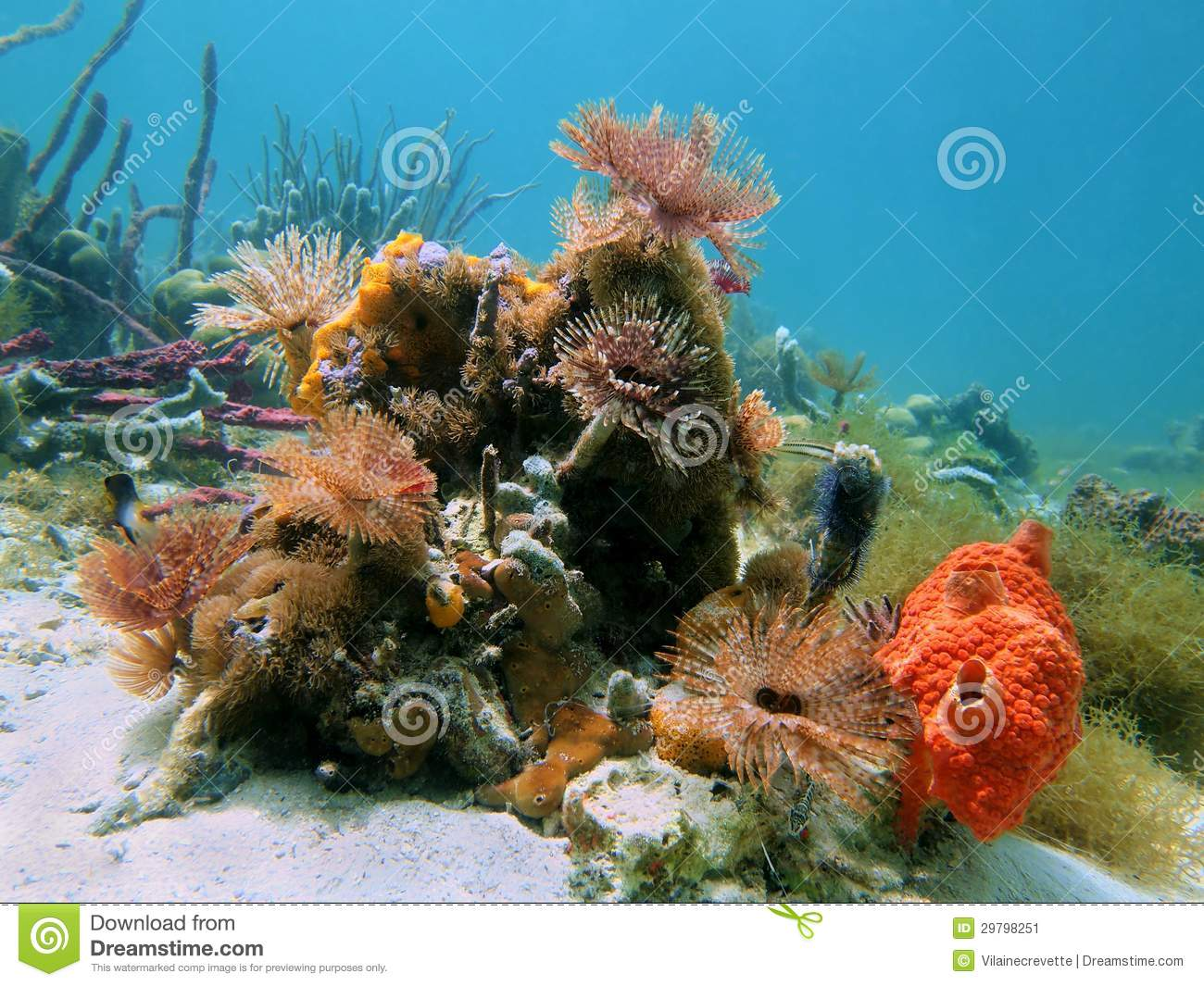 Colorful Marine Life With Sea Sponges And Tropical Fish ... |Colorful Underwater Life