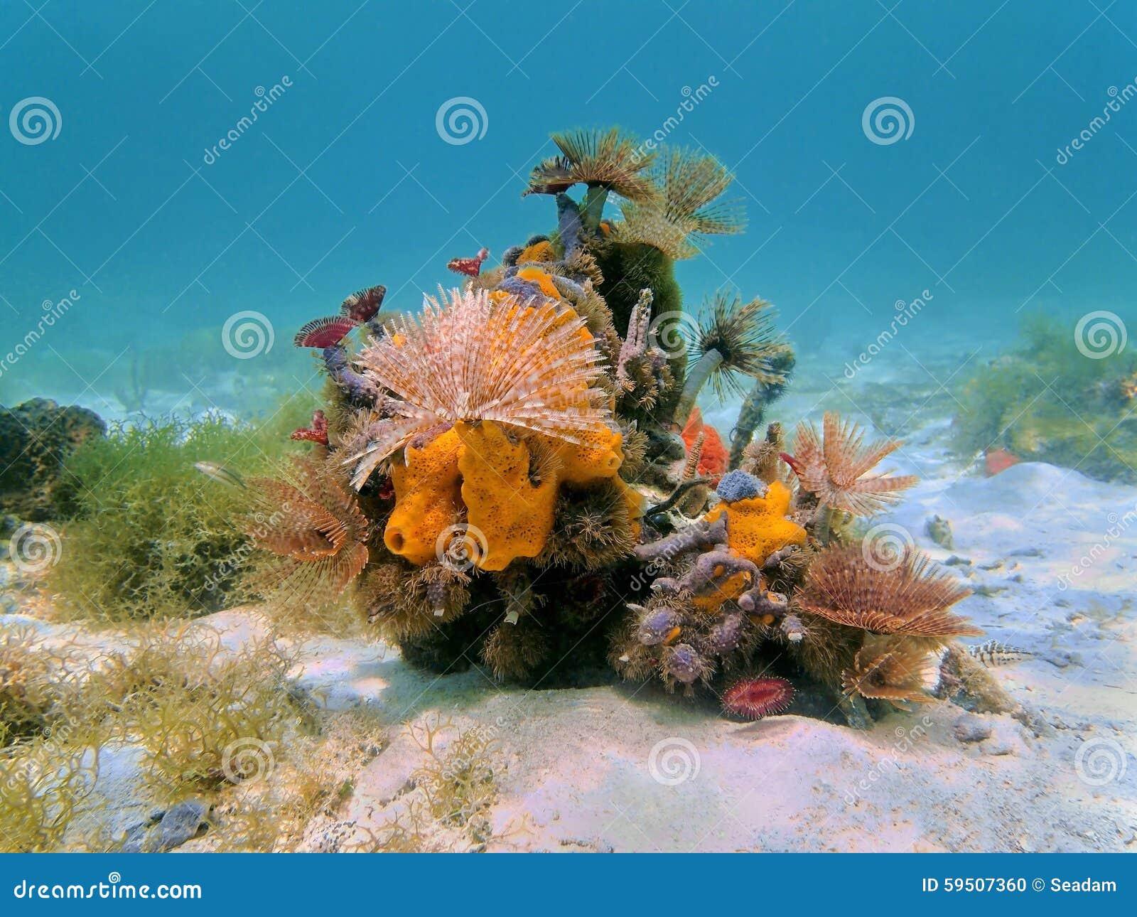 Colorful Underwater Marine Life Caribbean Sea Stock Photo ... |Colorful Underwater Life