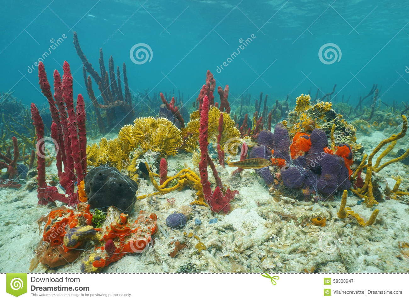 Ocean of Color - Wall Mural & Photo Wallpaper - Photowall |Colorful Underwater Life